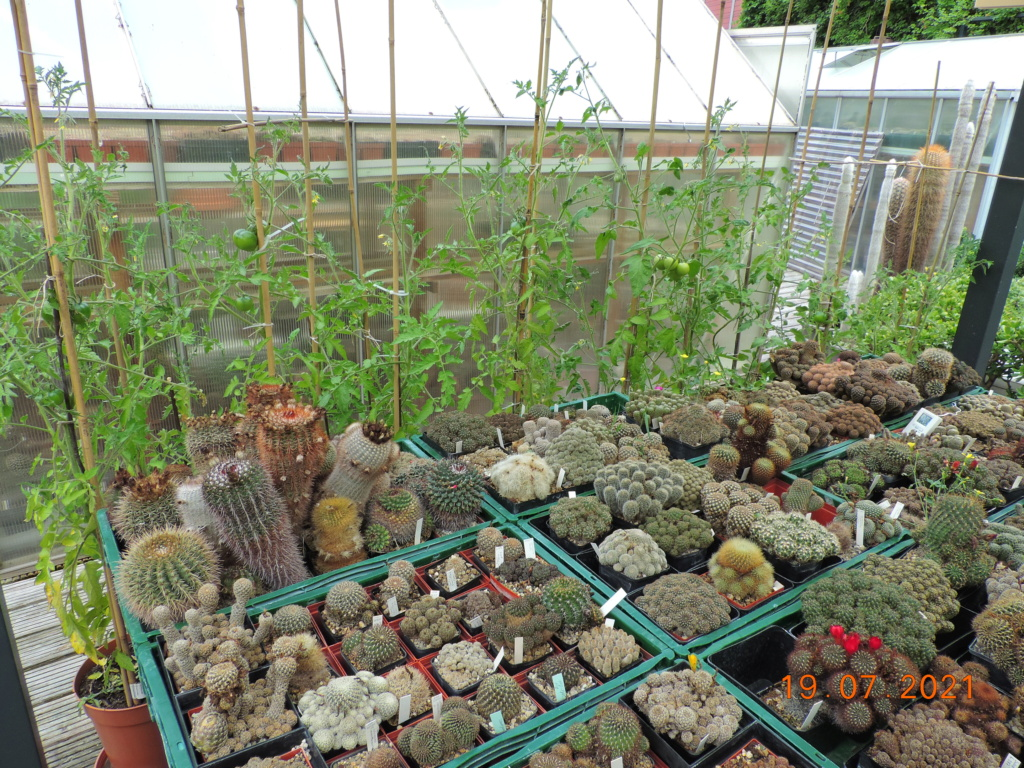 Cacti and Sukkulent in Köln, every day new flowers in the greenhouse Part 264 Bild8369