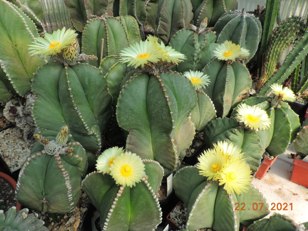 Cacti and Sukkulent in Köln, every day new flowers in the greenhouse Part 264 Bild8374