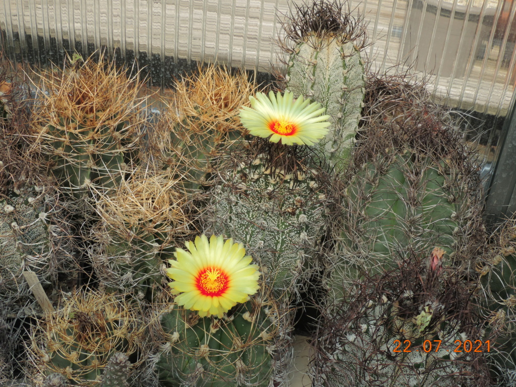 Cacti and Sukkulent in Köln, every day new flowers in the greenhouse Part 264 Bild8377