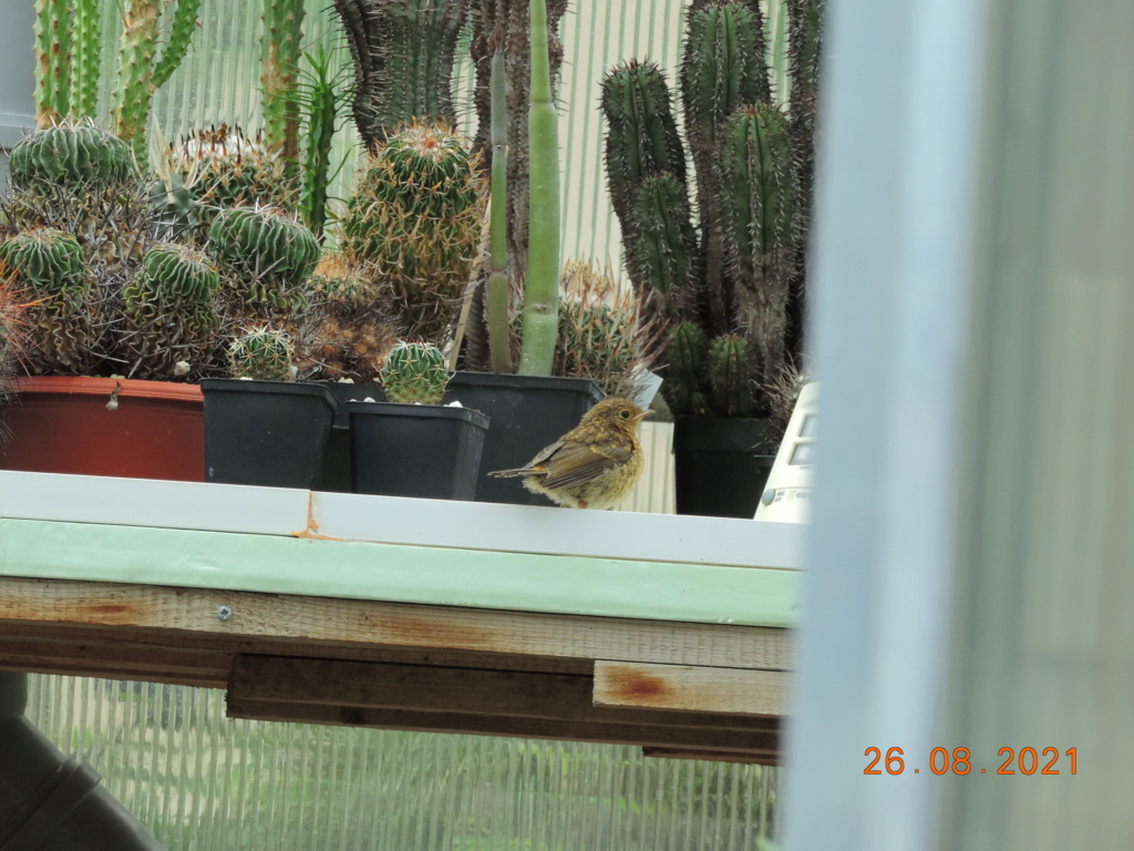 Cacti and Sukkulent in Köln, every day new flowers in the greenhouse Part 267 Bild8707