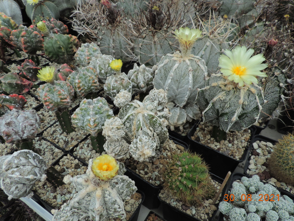 Cacti and Sukkulent in Köln, every day new flowers in the greenhouse Part 267 Bild8716