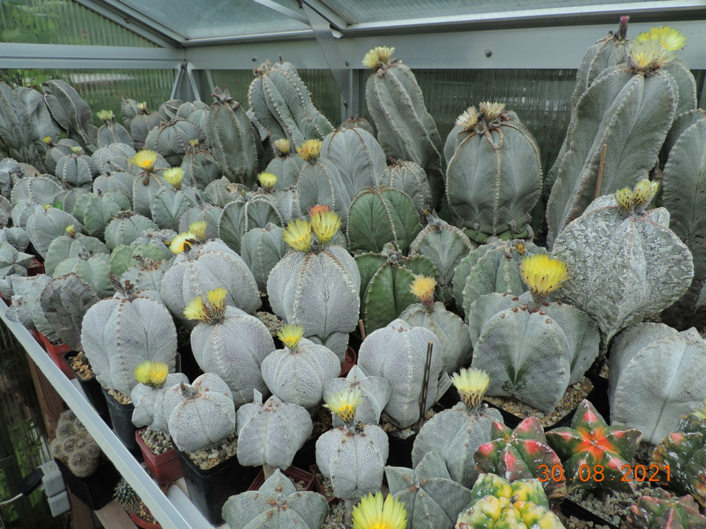 Cacti and Sukkulent in Köln, every day new flowers in the greenhouse Part 267 Bild8717