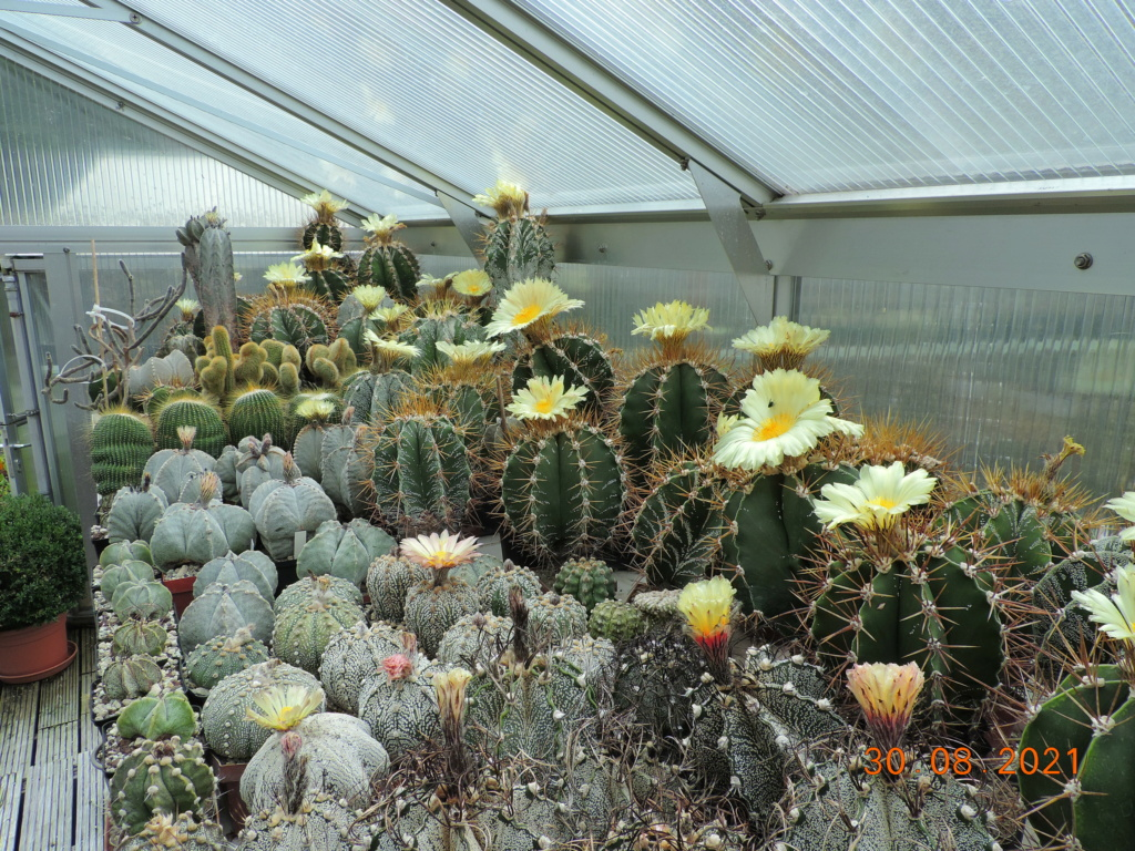 Cacti and Sukkulent in Köln, every day new flowers in the greenhouse Part 267 Bild8718
