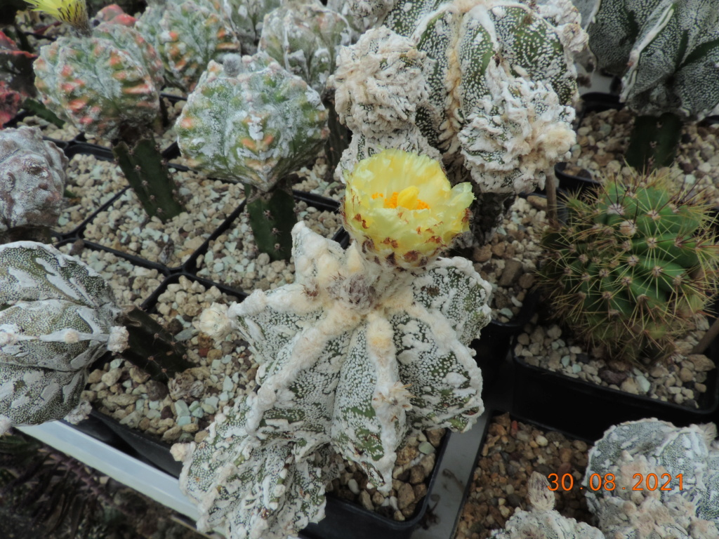 Cacti and Sukkulent in Köln, every day new flowers in the greenhouse Part 267 Bild8735