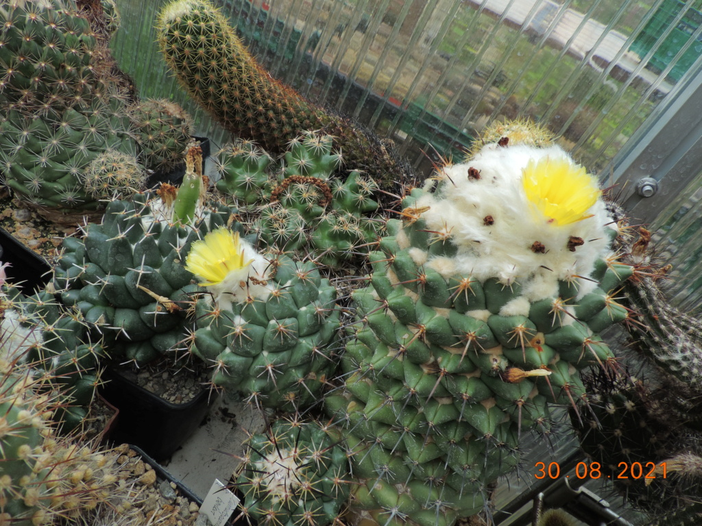 Cacti and Sukkulent in Köln, every day new flowers in the greenhouse Part 267 Bild8751