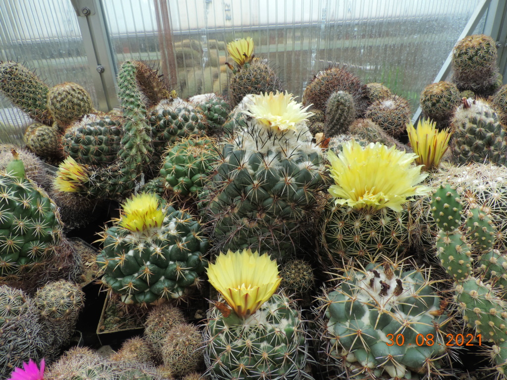 Cacti and Sukkulent in Köln, every day new flowers in the greenhouse Part 267 Bild8752