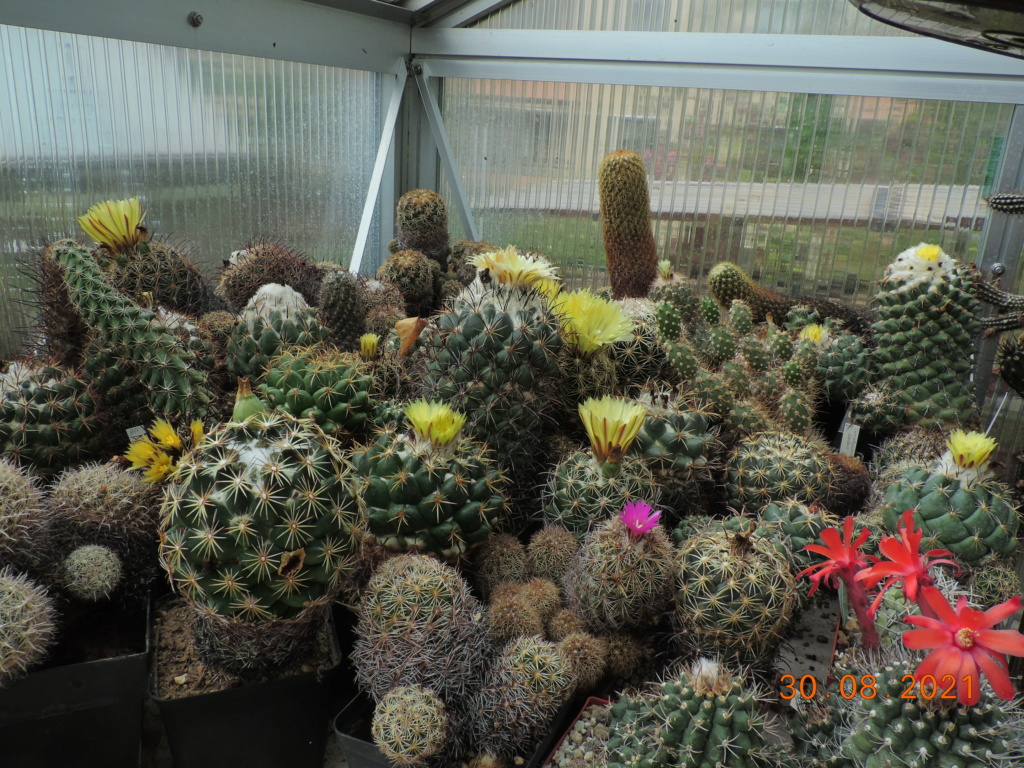 Cacti and Sukkulent in Köln, every day new flowers in the greenhouse Part 267 Bild8754