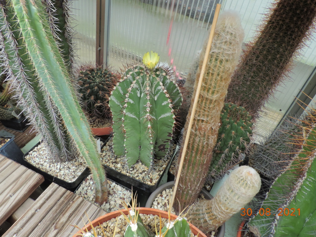 Cacti and Sukkulent in Köln, every day new flowers in the greenhouse Part 267 Bild8757