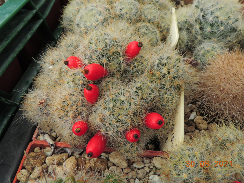 Cacti and Sukkulent in Köln, every day new flowers in the greenhouse Part 267 Bild8760