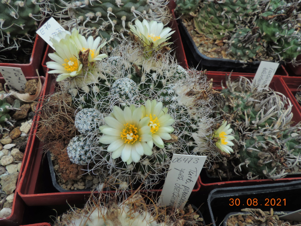 Cacti and Sukkulent in Köln, every day new flowers in the greenhouse Part 267 Bild8770