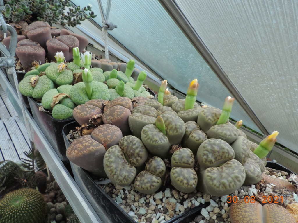 Cacti and Sukkulent in Köln, every day new flowers in the greenhouse Part 267 Bild8772