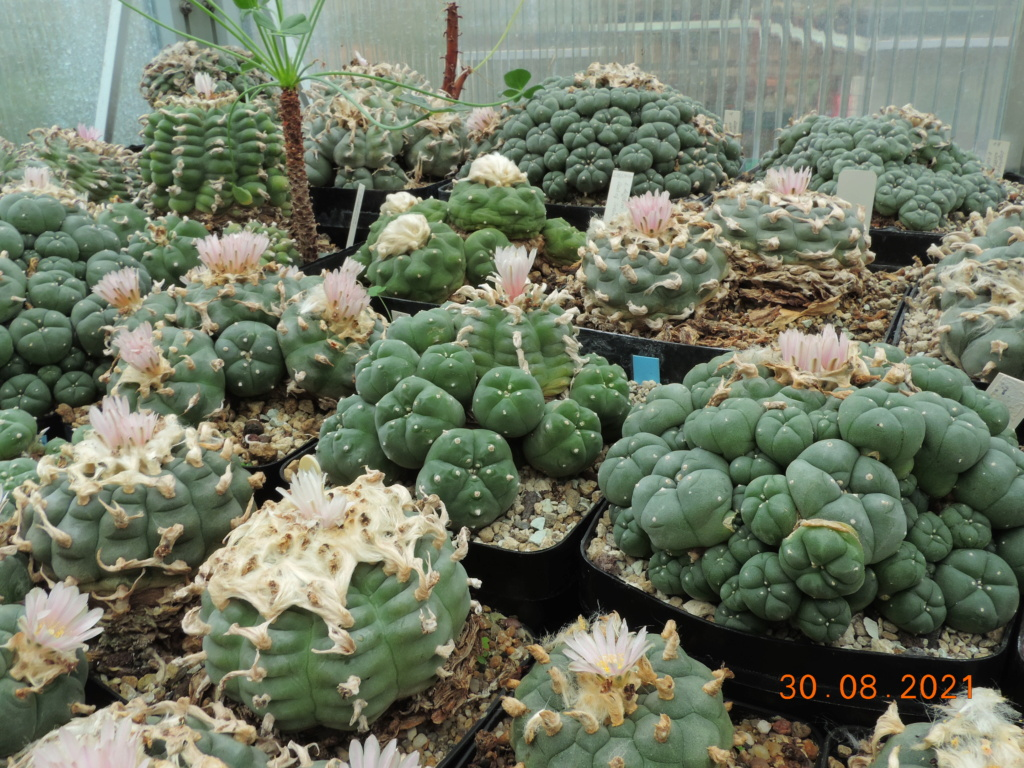Cacti and Sukkulent in Köln, every day new flowers in the greenhouse Part 267 Bild8780