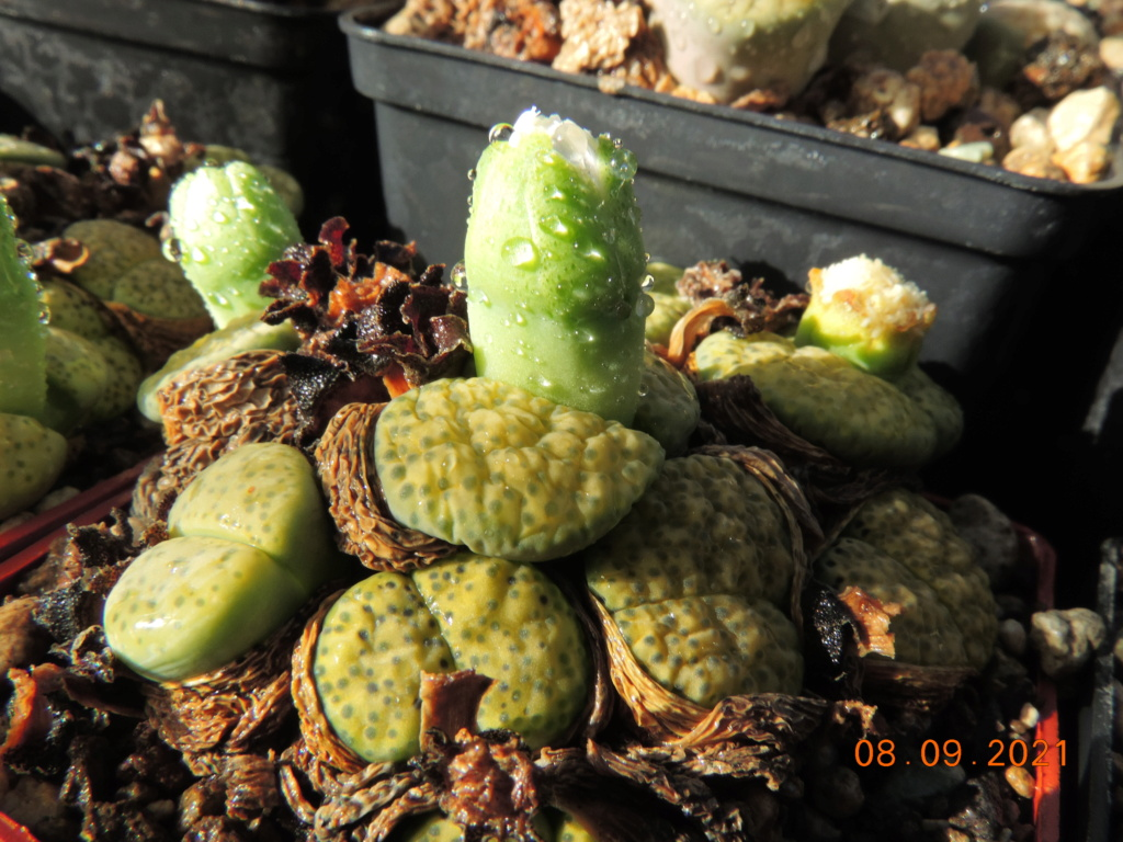 Cacti and Sukkulent in Köln, every day new flowers in the greenhouse Part 267 Bild8790