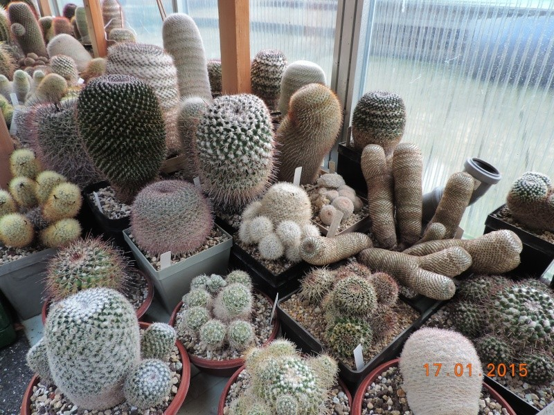 Cacti and Sukkulent in Köln, every day new flowers in the greenhouse Part 117 Bild_133