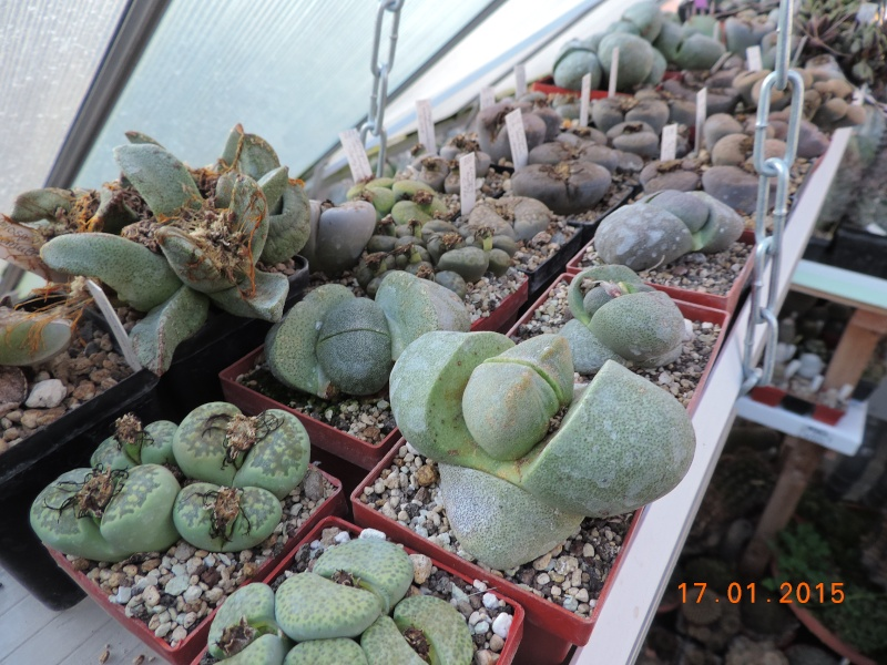 Cacti and Sukkulent in Köln, every day new flowers in the greenhouse Part 117 Bild_143