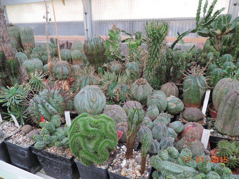 Cacti and Sukkulent in Köln, every day new flowers in the greenhouse Part 117 Bild_148