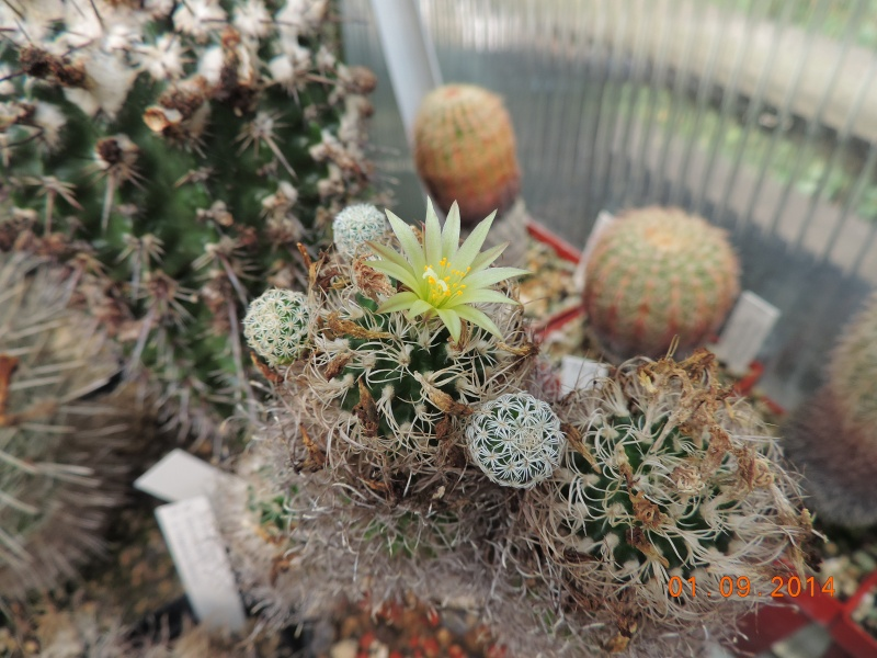 Cacti and Sukkulent in Köln, every day new flowers in the greenhouse Part 117 Bild_158