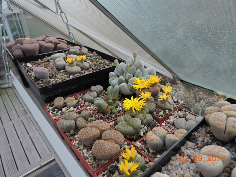 Cacti and Sukkulent in Köln, every day new flowers in the greenhouse Part 118 Bild_196