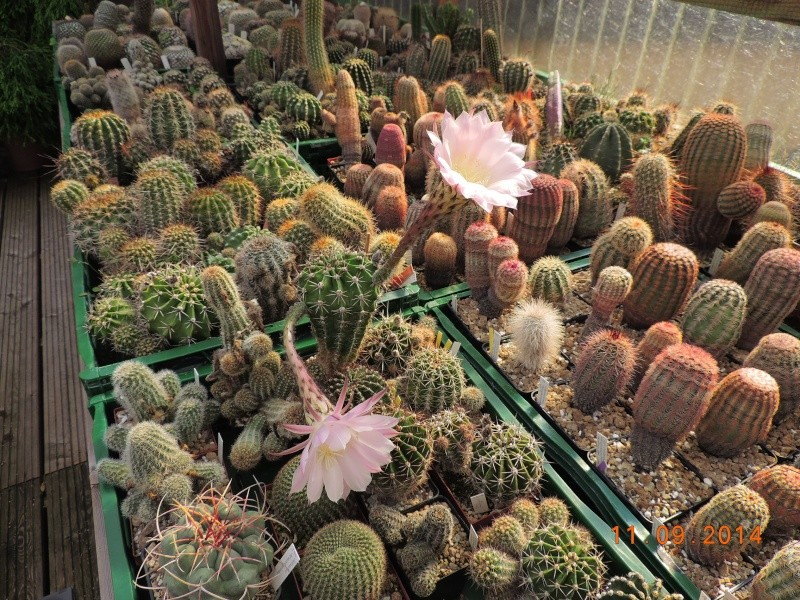 Cacti and Sukkulent in Köln, every day new flowers in the greenhouse Part 118 Bild_295