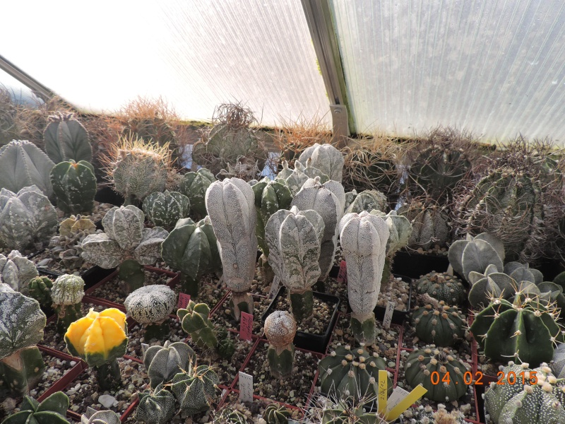 Cacti and Sukkulent in Köln, every day new flowers in the greenhouse Part 119 Bild_312