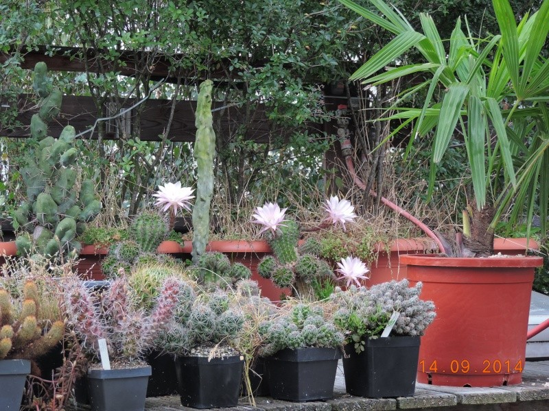 Cacti and Sukkulent in Köln, every day new flowers in the greenhouse Part 119 Bild_325