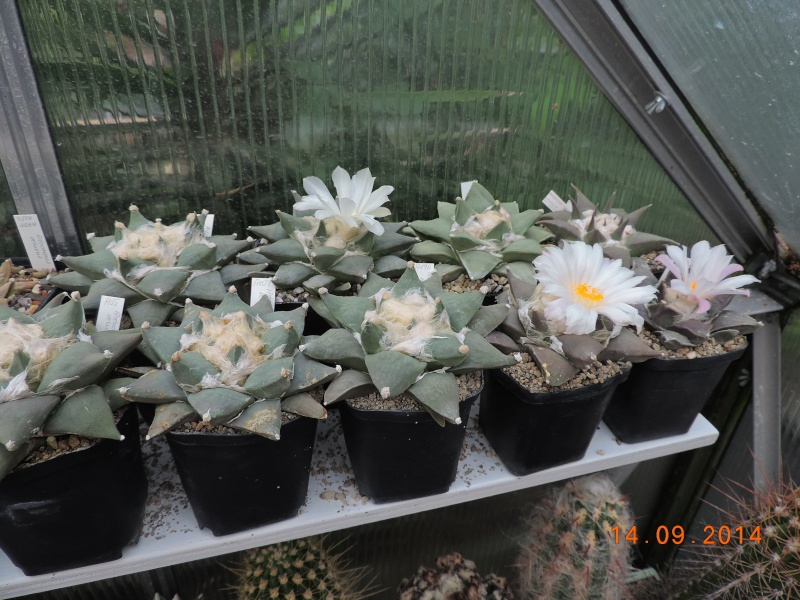 Cacti and Sukkulent in Köln, every day new flowers in the greenhouse Part 119 Bild_327
