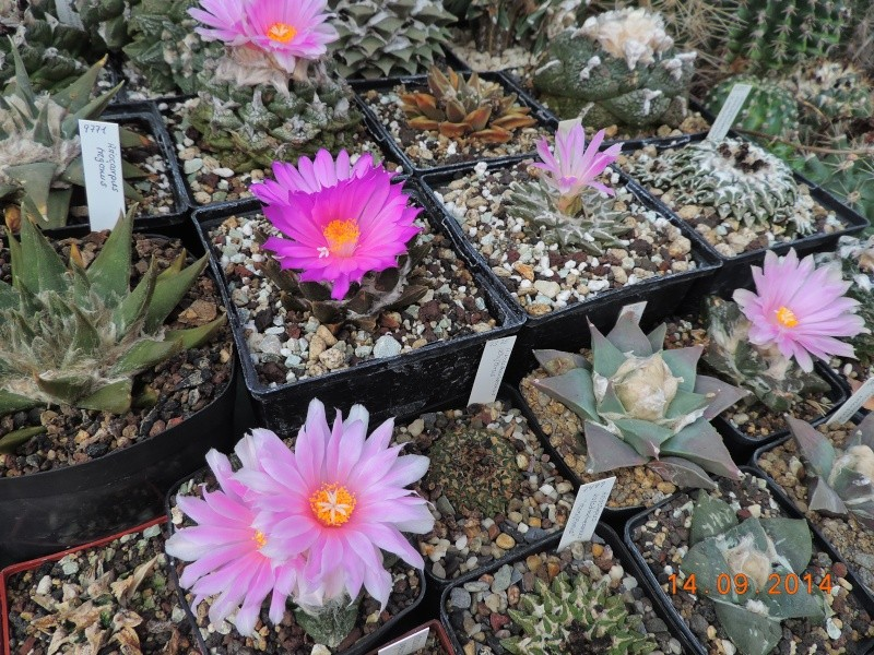 Cacti and Sukkulent in Köln, every day new flowers in the greenhouse Part 119 Bild_333
