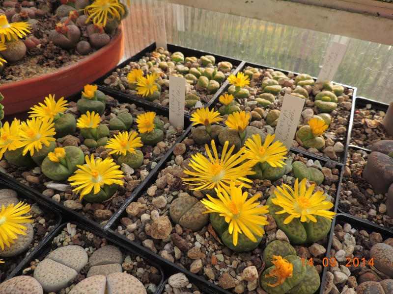Cacti and Sukkulent in Köln, every day new flowers in the greenhouse Part 119 Bild_353