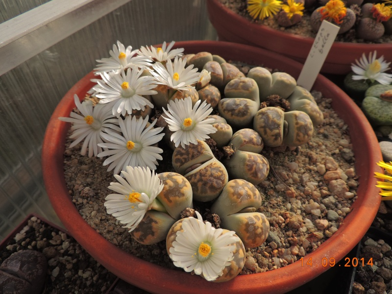 Cacti and Sukkulent in Köln, every day new flowers in the greenhouse Part 119 Bild_354