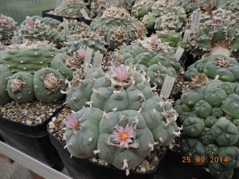 Cacti and Sukkulent in Köln, every day new flowers in the greenhouse Part 119 Bild_407