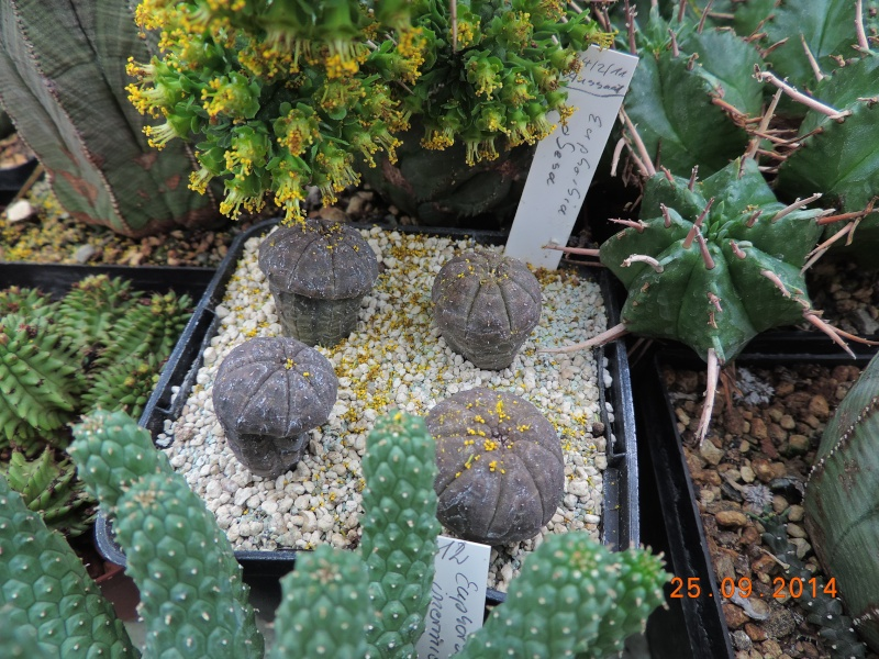 Cacti and Sukkulent in Köln, every day new flowers in the greenhouse Part 119 Bild_409