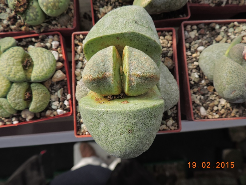 Cacti and Sukkulent in Köln, every day new flowers in the greenhouse Part 120 Bild_421
