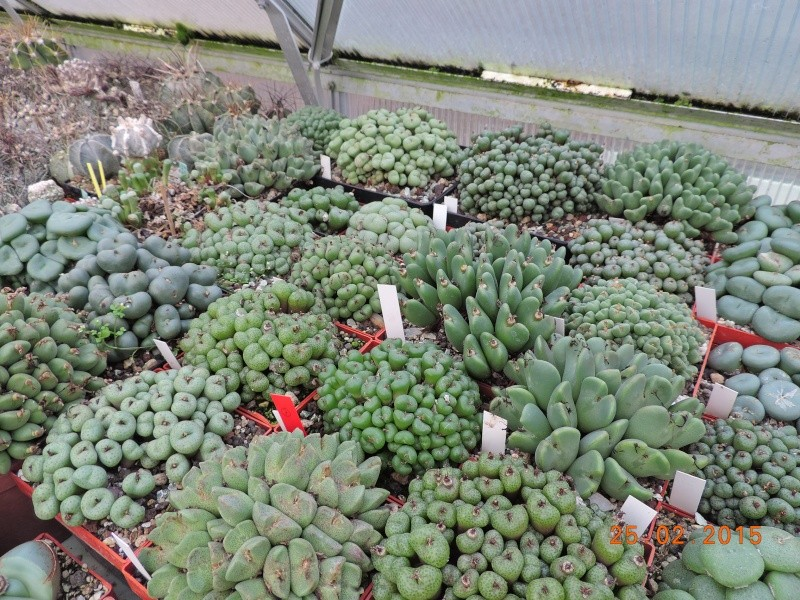 Cacti and Sukkulent in Köln, every day new flowers in the greenhouse Part 120 Bild_432