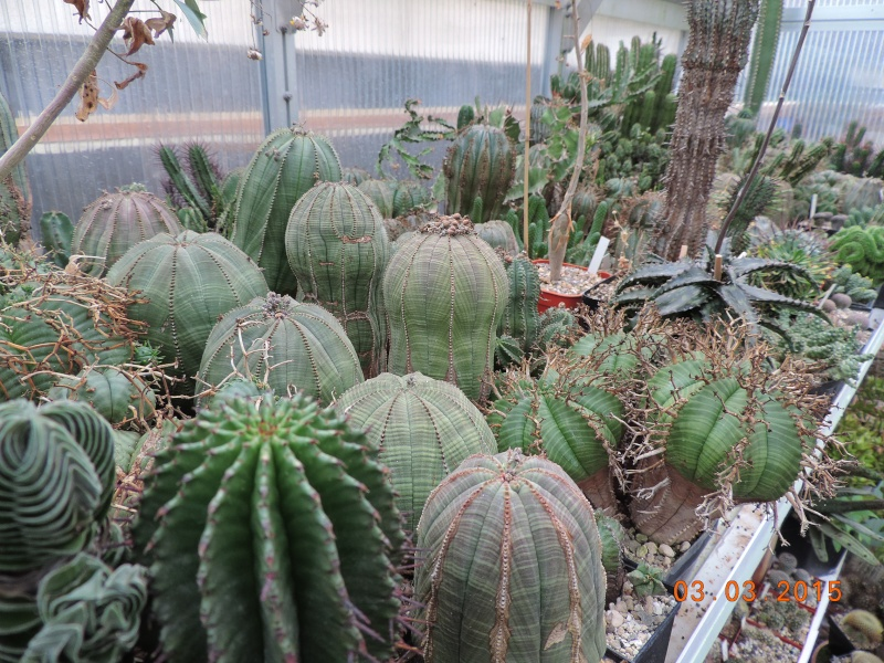 Cacti and Sukkulent in Köln, every day new flowers in the greenhouse Part 120 Bild_445