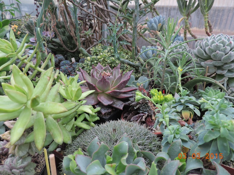 Cacti and Sukkulent in Köln, every day new flowers in the greenhouse Part 120 Bild_446
