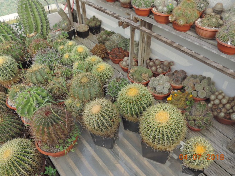 Cacti and Sukkulent in Köln, every day new flowers in the greenhouse Part 195 Bild_503