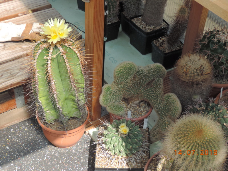 Cacti and Sukkulent in Köln, every day new flowers in the greenhouse Part 196 Bild_590