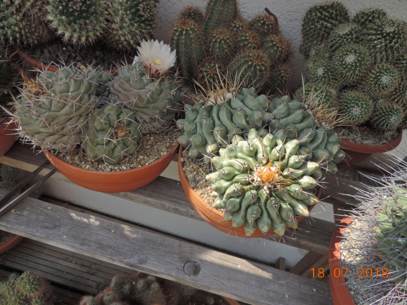Cacti and Sukkulent in Köln, every day new flowers in the greenhouse Part 196 Bild_638