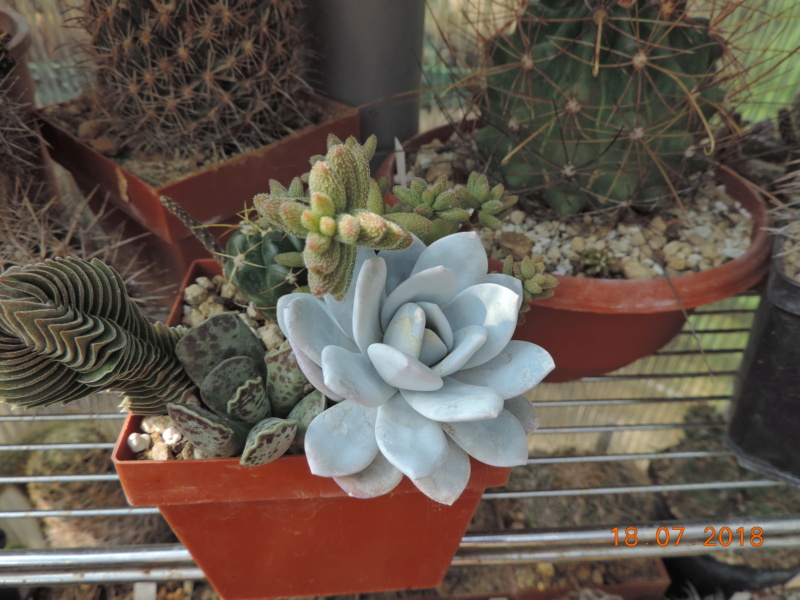 Cacti and Sukkulent in Köln, every day new flowers in the greenhouse Part 196 Bild_640