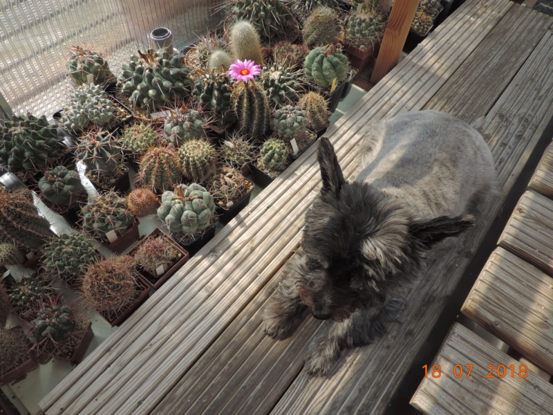 Cacti and Sukkulent in Köln, every day new flowers in the greenhouse Part 196 Bild_645