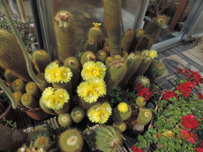 Cacti and Sukkulent in Köln, every day new flowers in the greenhouse Part 196 Bild_647