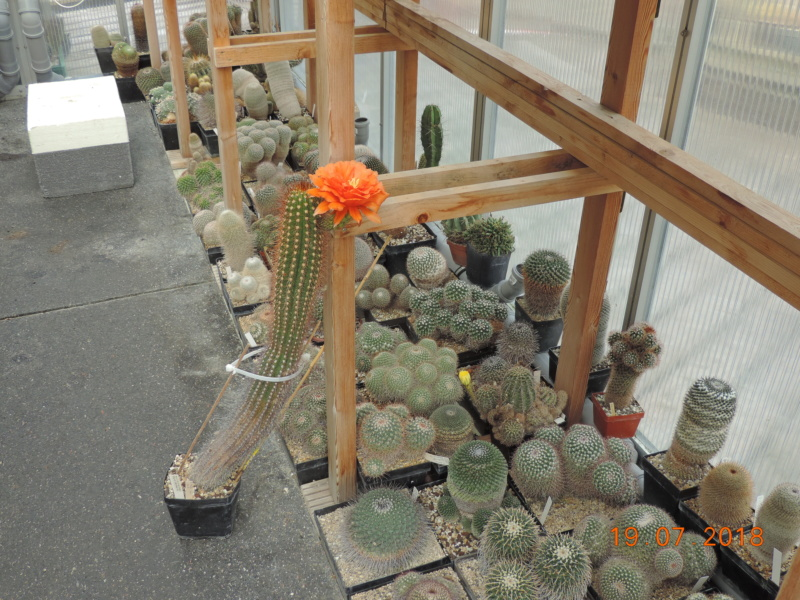 Cacti and Sukkulent in Köln, every day new flowers in the greenhouse Part 196 Bild_660