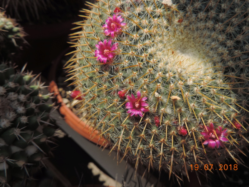 Cacti and Sukkulent in Köln, every day new flowers in the greenhouse Part 196 Bild_664