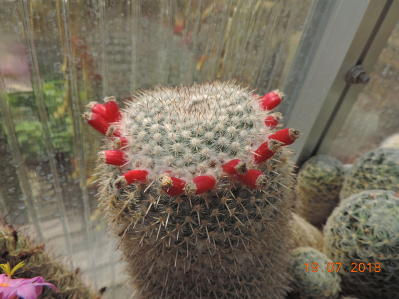 Cacti and Sukkulent in Köln, every day new flowers in the greenhouse Part 196 Bild_669