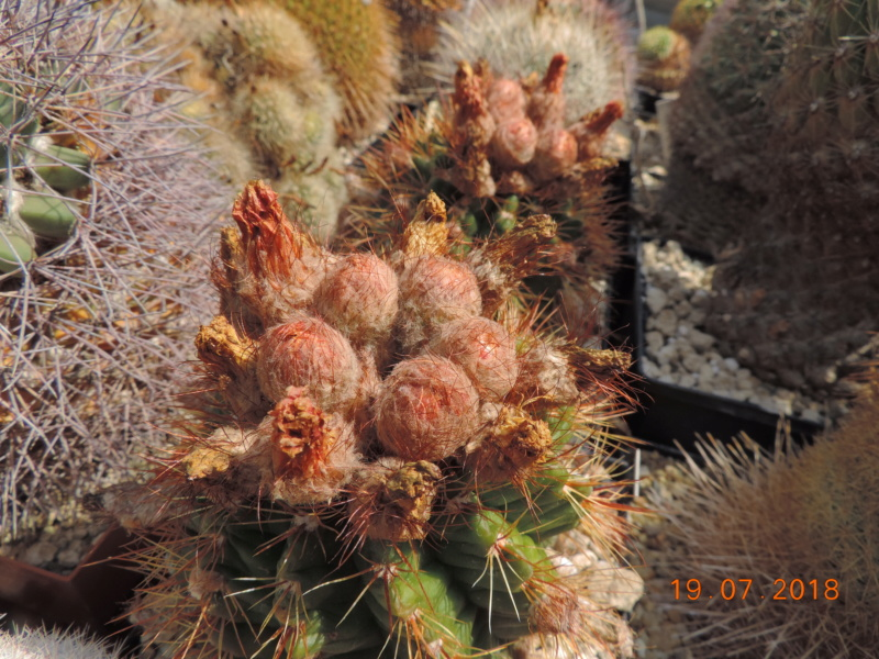 Cacti and Sukkulent in Köln, every day new flowers in the greenhouse Part 196 Bild_693