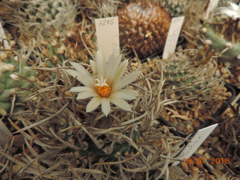 Cacti and Sukkulent in Köln, every day new flowers in the greenhouse Part 196 Bild_705