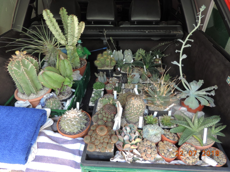 Cacti and Sukkulent in Köln, every day new flowers in the greenhouse Part 196 Bild_708