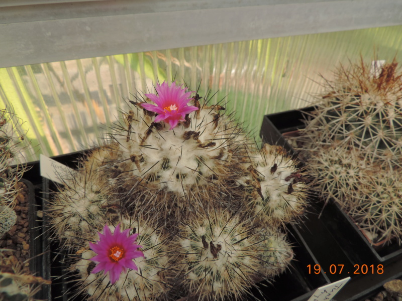 Cacti and Sukkulent in Köln, every day new flowers in the greenhouse Part 196 Bild_723