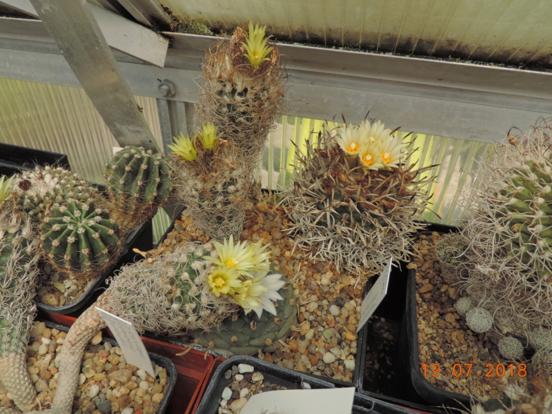 Cacti and Sukkulent in Köln, every day new flowers in the greenhouse Part 196 Bild_726