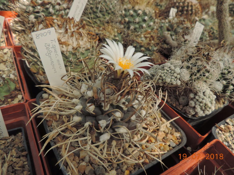 Cacti and Sukkulent in Köln, every day new flowers in the greenhouse Part 196 Bild_729